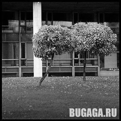 Любовь деревьев