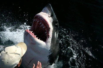 Дантисты для акулы