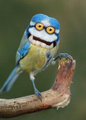 Птичка :)