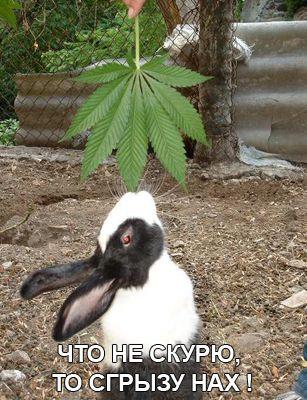 Правильный кролик