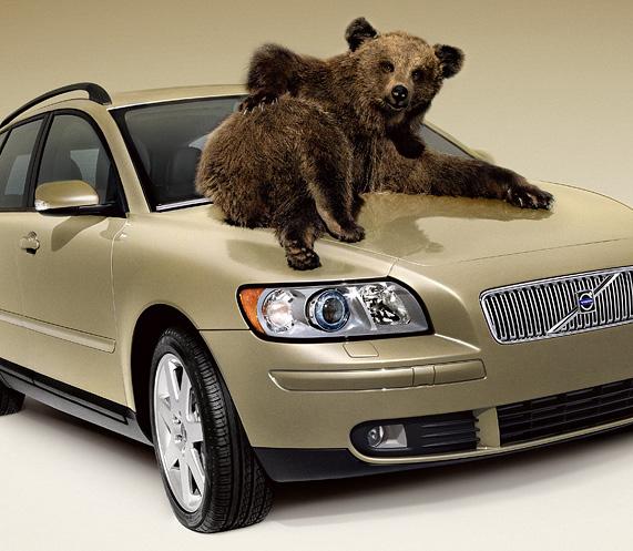 Прикольные картинки с медведем в машине, открытки позитивчик буква