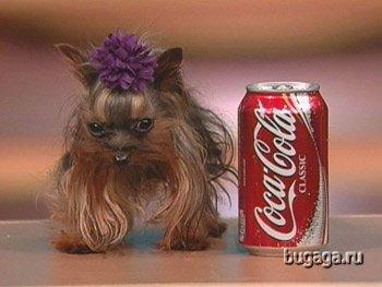 Самая маленькая собачка в мире. ФОТО