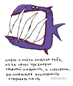 Рыбы от llemur