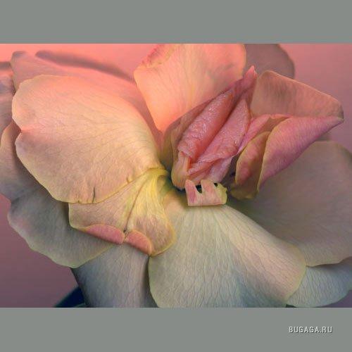 фото эротические цветы