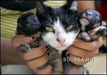 Генетическая аномалия: кошка родила щенков.