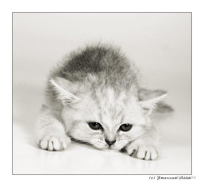 Красивые картинки котенок я скучаю