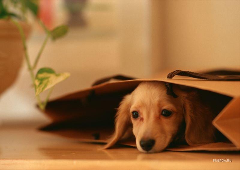 картинки собак на рабочий стол красивые № 434242  скачать