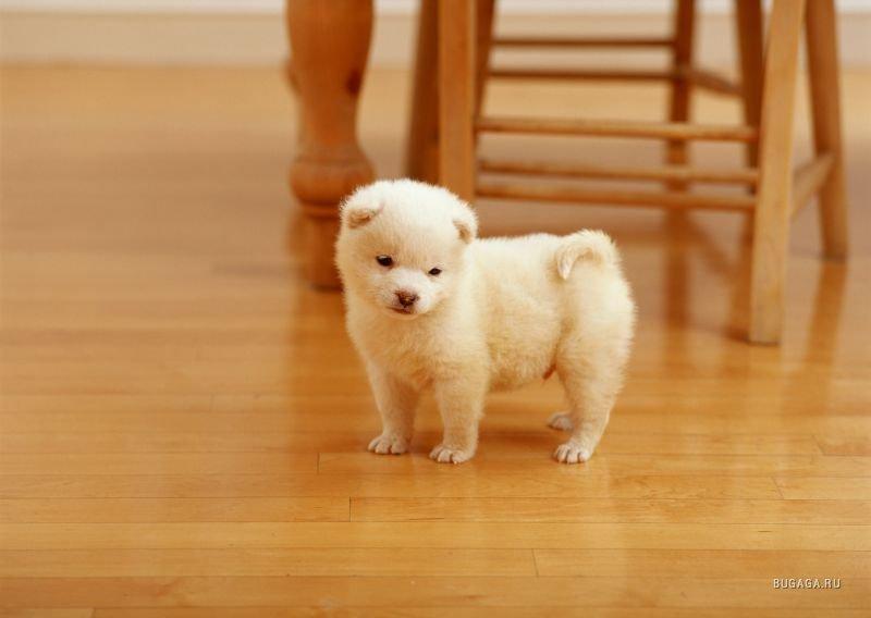 Красивая фотосессия щенков (99 фото)