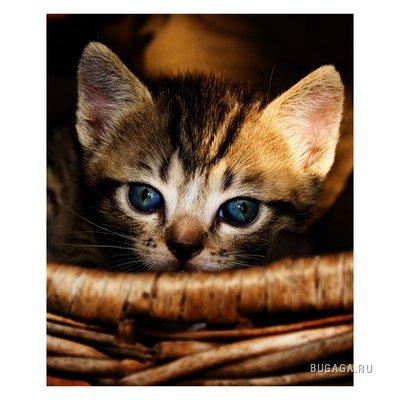 кошки 2