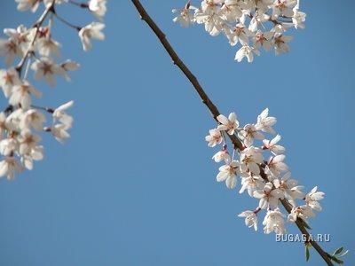 Весна в двери стучт !