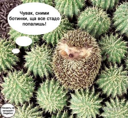фото приколы с матом: