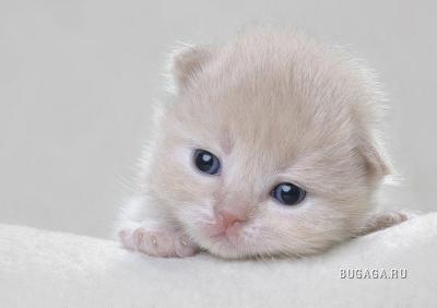 Кошки =)