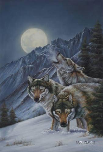 """Схема вышивки  """"Волки """" ."""