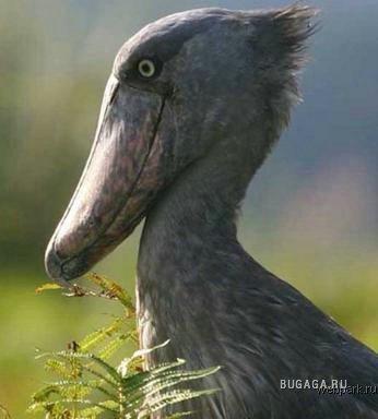 Самые странные создания природы