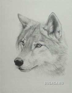 Волки (продолжение =)... )