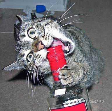 Обалдеть! Коты уже отмечают! А мы когда?