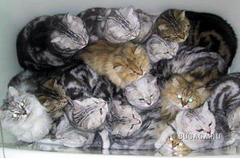 Кошки. Вместе мы - сила!