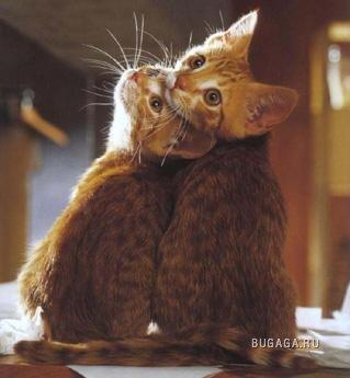 Кошки... кошки... А кошки как люююдии!...