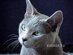 кошки, 8 фото