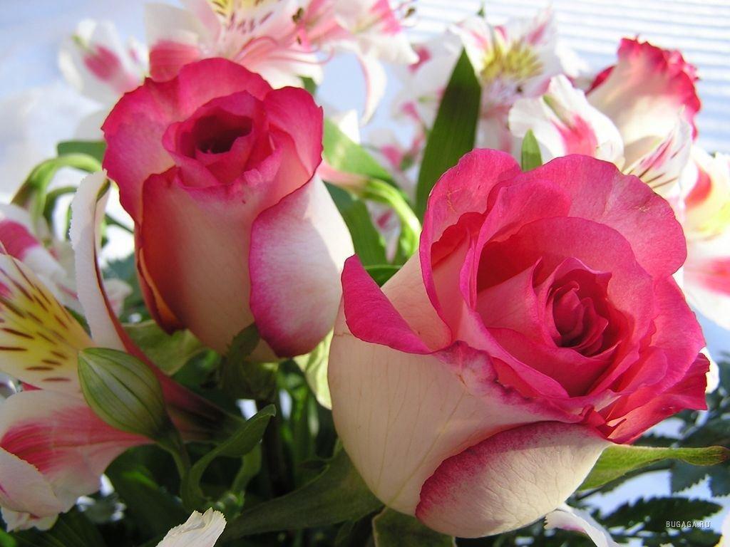 гарбуз, самые красивые цветы в блогах фото варки говяжьего
