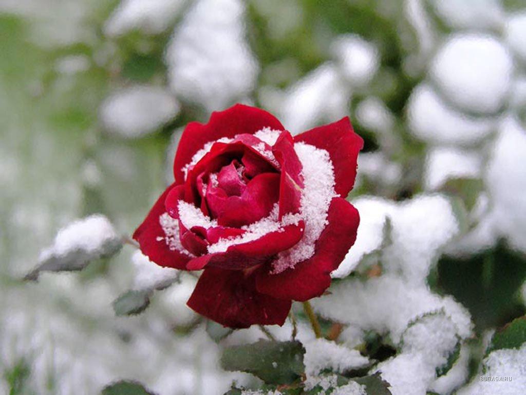 Зима и цветы
