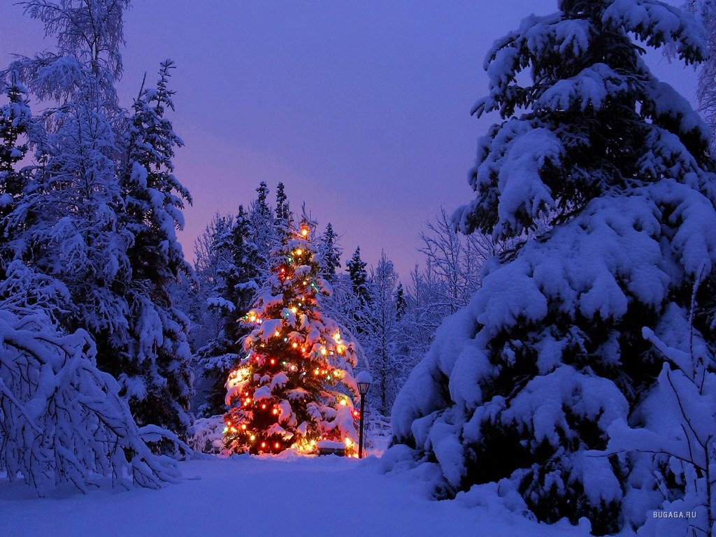 красивые картинки с новогодними пейзажами оральника губы как