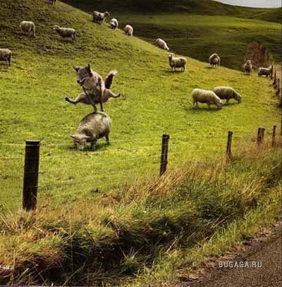 ПОДБОРКА: забавные животные