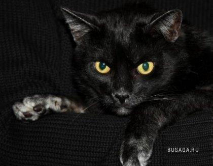 Подборка: чёрный цвет