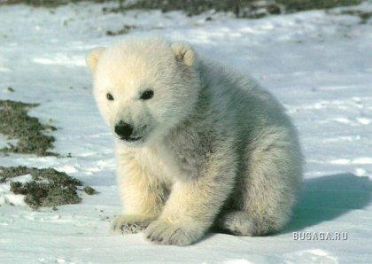 Медведи - забавные и милые животные