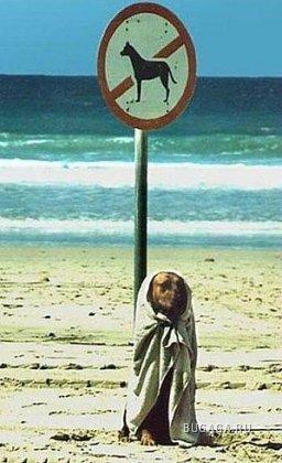 Подборка: Собачья жизнь