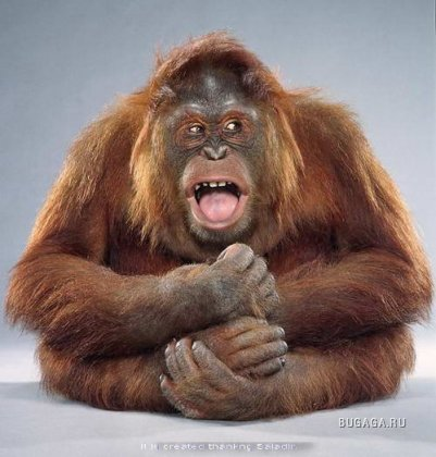 Человек звучит гордо, а обезьяна перспективно!