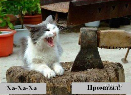 Подборка: коты говорят!