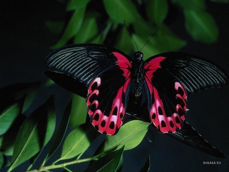 Butterflies - Kelebek.