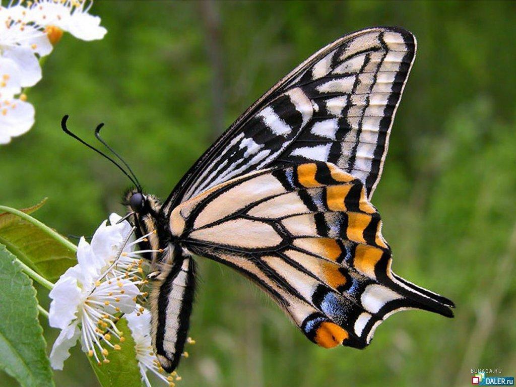 Что общего между картинками бабочка снежинка горы и собор