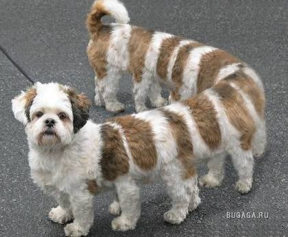 Прикольные собачки:)