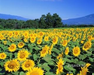 Самые позитивные цветы на планете...