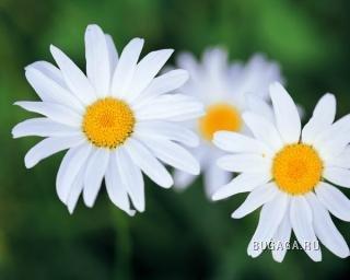 Вторые позитивные цветы