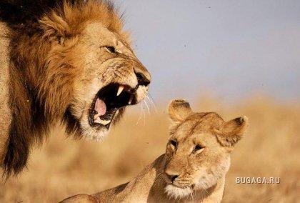 Дикая Африка.