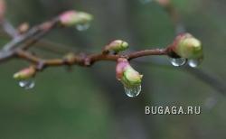 Весна наступила!!