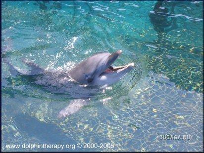 Дельфинчики.
