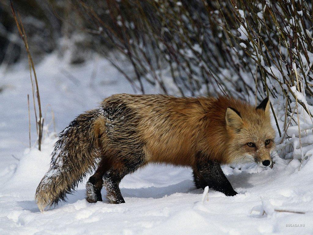 Животные тюменской области фото 2