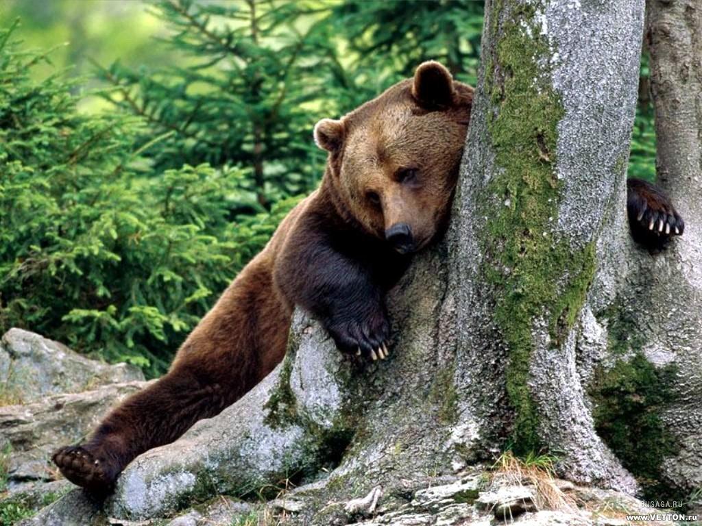 лесные фотографии: