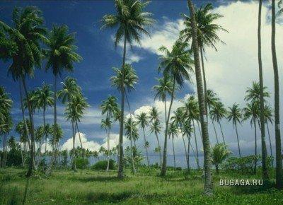 Пальмы