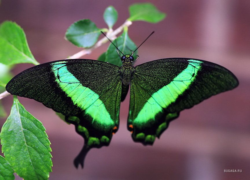 Бабочки (картинки) Бабочки (фото) Группы Мой Мир