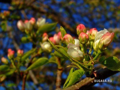 Цветочки (весна)