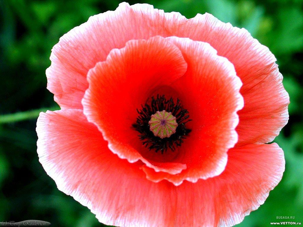 Цветы картинки для детей скачать 7
