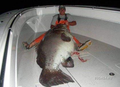 Ничего себе рыбалка!