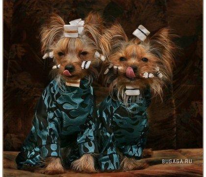 Эти милые собачки...