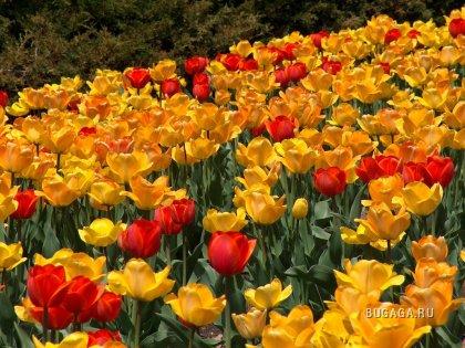 Подборка: Цветы