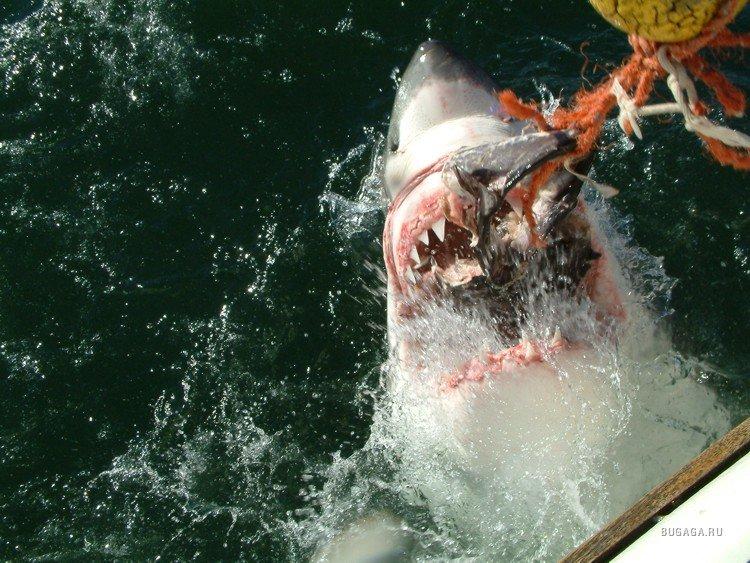 рыбалка на акул в португалии